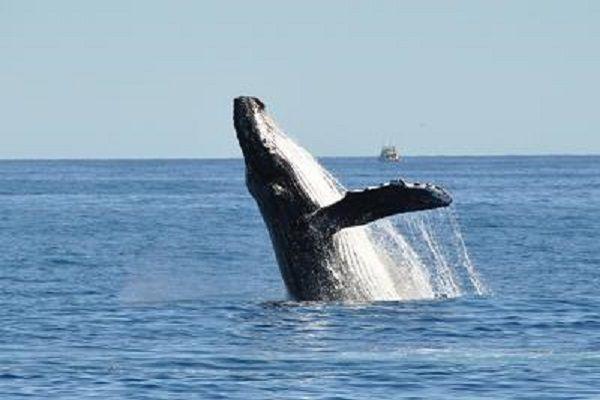 cms_13339/balena.jpg