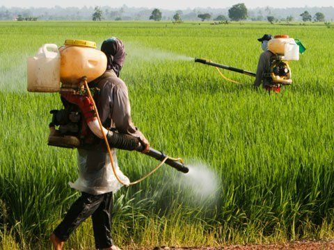cms_8572/pesticidi.jpeg