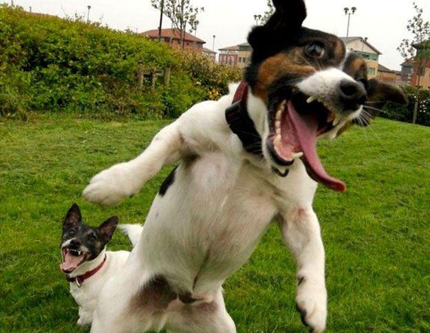 cms_1155/smiling-laughing-animals_(8).jpg