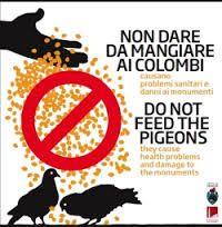 cms_764/vietato_cibare_piccioni(2).jpg